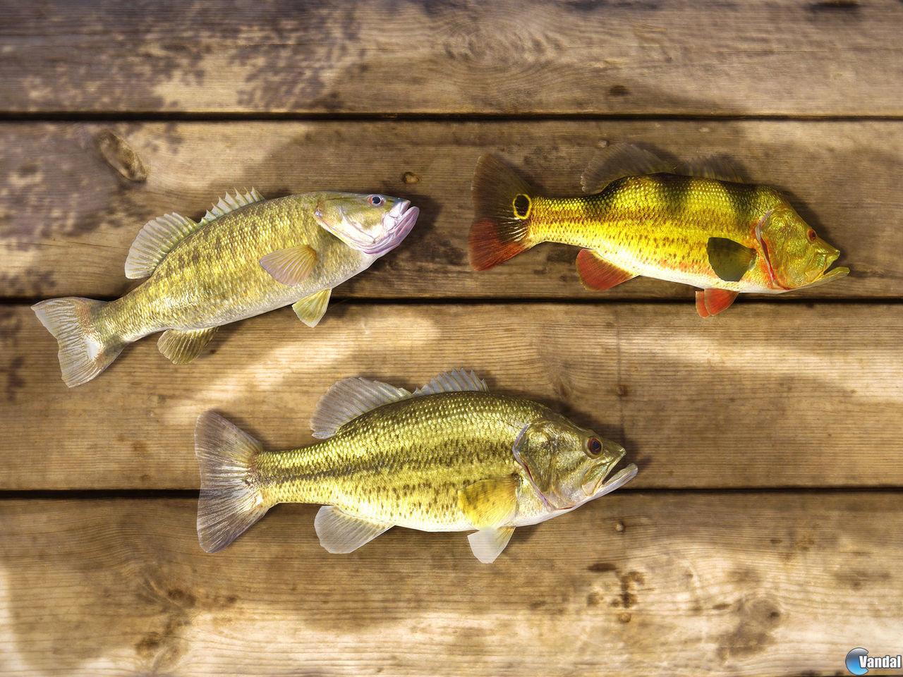 Fishing planet toda la informaci n pc vandal for Fishing planet ps4