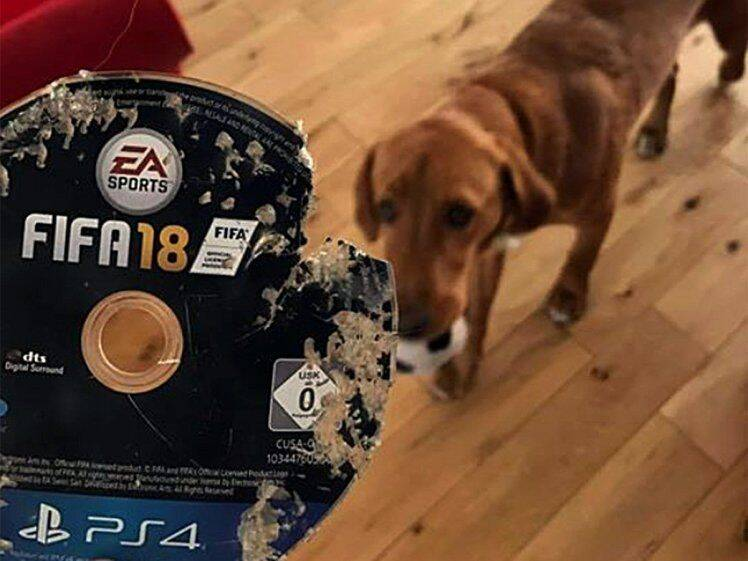 Su perro se come su FIFA 18 y Amazon le compensa con otra copia