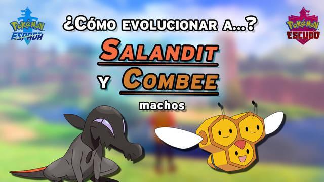 Truco para evolucionar a Salandit y Combee machos en Pokémon Espada y Escudo