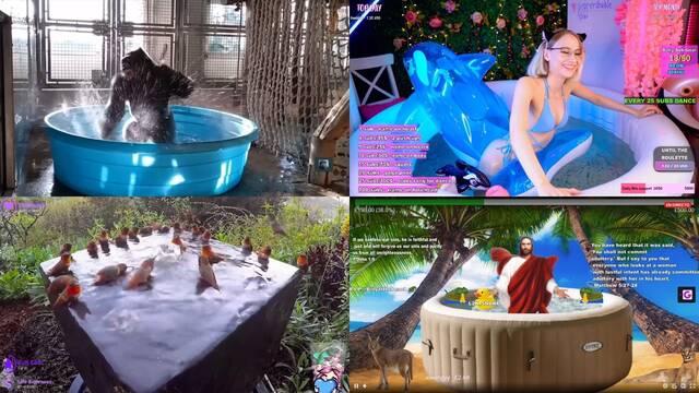 Twitch Hot tubs piscinas nutrias pájaros animales parodias