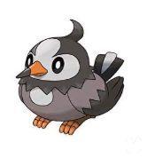 Pokémon GO - Starly